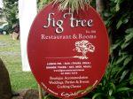 Fig Tree, Byron Bay